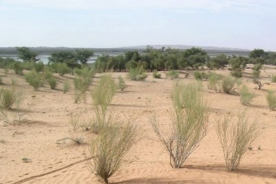 Desertification is spreading in Burkina Faso.