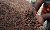 Ghana, Cote d'Ivoire Join Forces on World Cocoa Pricing Regime