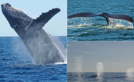 'Save the Whale' Campaigns Working, South African Summit Hears