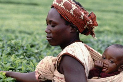 Tea pickers, Murang'a, Kenya, 1991