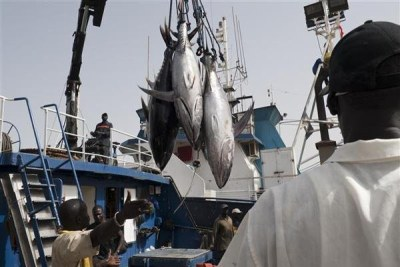 Yellowfin tuna at the fishing port of Dakar.