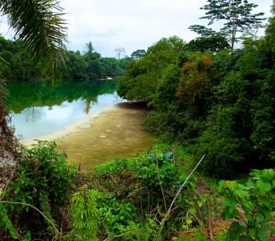 Greening of Gabon