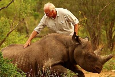 Un rhinocéros.