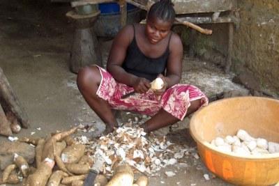 Preparing cassava, a staple in Singiam, Liberia.