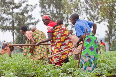 Agriculture project funded by donors (file photo).