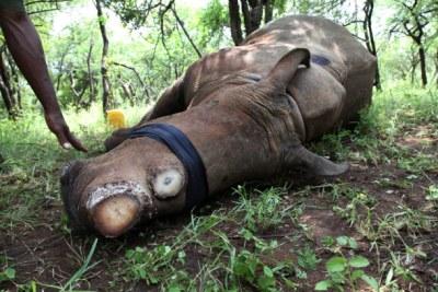 Mutilated rhino (file photo).