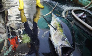 Why It's So Hard to Fight Fisheries Crime