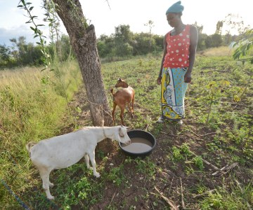 East African Farmers Fighting Climate Change