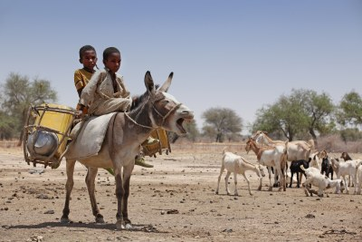 Two little boys ride a donkey in N'Djamena, Chad.