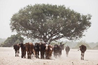Les récents succès montrent que désertification et dégradation des terres ne sont pas des problèmes insurmontables.
