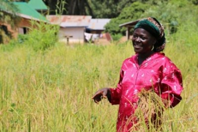 Last June, Mary Wagbo, a farmer from the Liberian region of Lofa County, couldn't plant the rice as Ebola was spreading fast in the area.