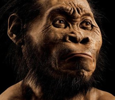Small Brain Didn't Hold Homo Naledi Back!