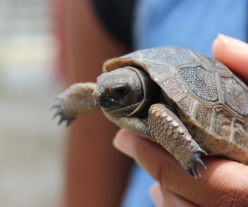 Dismay Over Loss of Baby Giant Tortoises - Seychelles Park