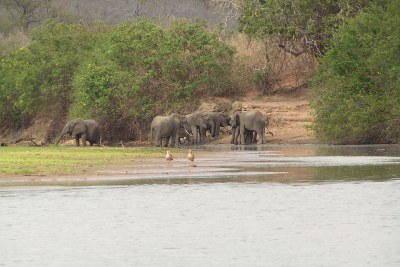Elephants in the Selous Game Reserve (file photo).
