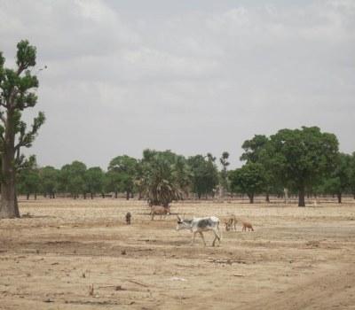 Farmers Prepare for a Climate-Insecure Future in Mali