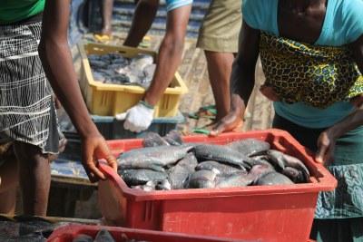 Fish farmer (file photo).