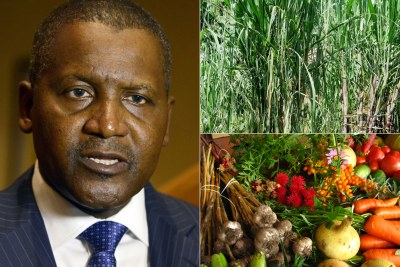 Aliko Dangote is putting billions into the agricultural sector in Nigeria.