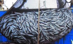 Le Maroc et l'UE s'entendent sur un nouvel accord de pêche