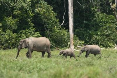 Elephant family (file photo).