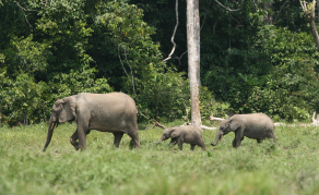 Don't Forget About Nigeria's Elephants!