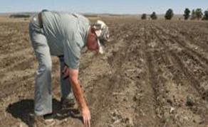 Projet de retrait des terres arables aux fermiers blancs en Afrique du Sud