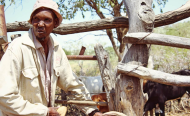 Drought-Parched Botswana Struggles to Keep Cattle Culture Alive