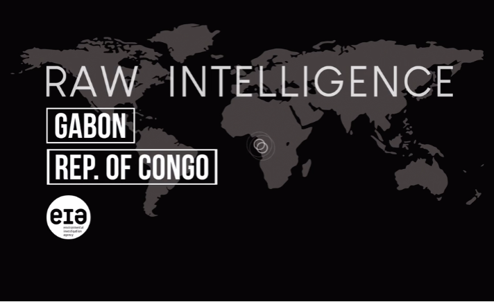 Inside One of the Congo Basin's Worst Forest Offenders