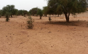 L'attaque meurtrière au Niger revendiquée par l'EIGS