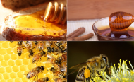 The Sweet Taste of Honey Can Bring Nigeria Money!