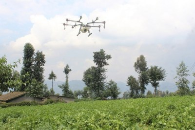 A drone sprays pesticides in a potato farm in Gataraga Sector, Musanze District.