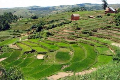 Agricultural terraces near Ambalandingana, Madagascar.